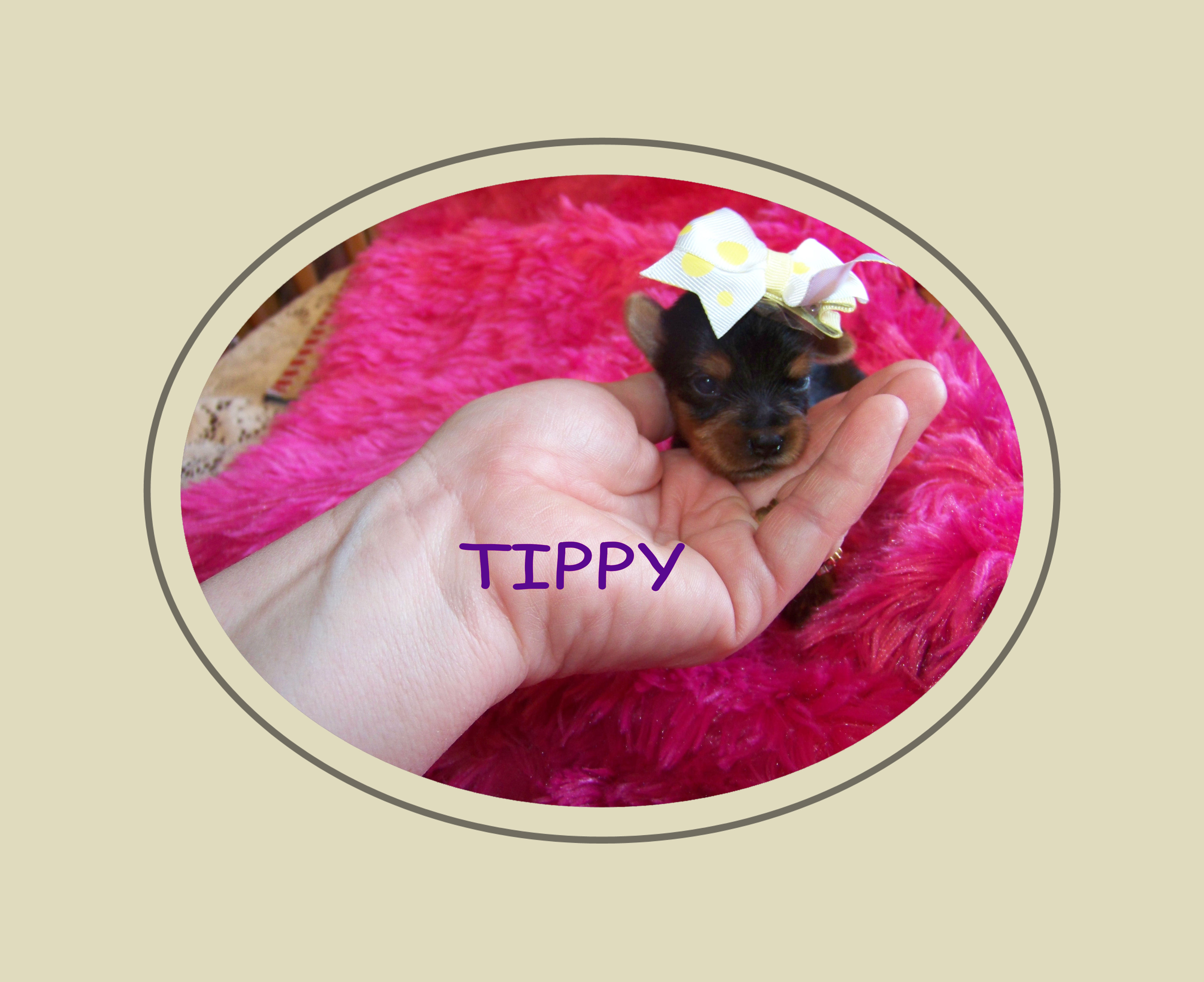 tippy2wksold1.jpg